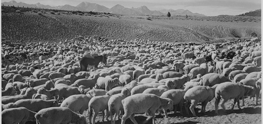 wool_ansel_adams